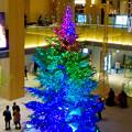 写真: JPタワー名古屋のクリスマスツリー 2017 No - 19