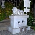 写真: ひっそりとしてた戌年の夜の羊神社 - 5:羊の像