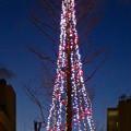 御園通商店街のクリスマスツリー? - 2