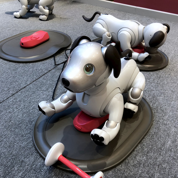 ソニーストア名古屋で始まってた新型「aibo」の展示会 - 1