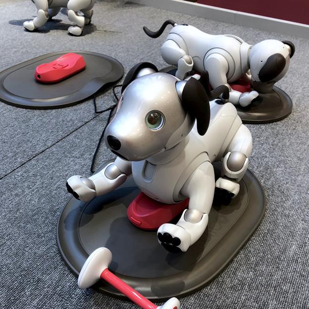 Photos: ソニーストア名古屋で始まってた新型「aibo」の展示会 - 1