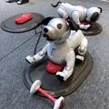 写真: ソニーストア名古屋で始まってた新型「aibo」の展示会 - 2