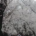 八幡河川敷・宇治橋公園