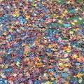 写真: 紅葉の絨毯。