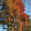 「雲巌寺」の紅葉