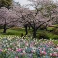 パステルカラーな春