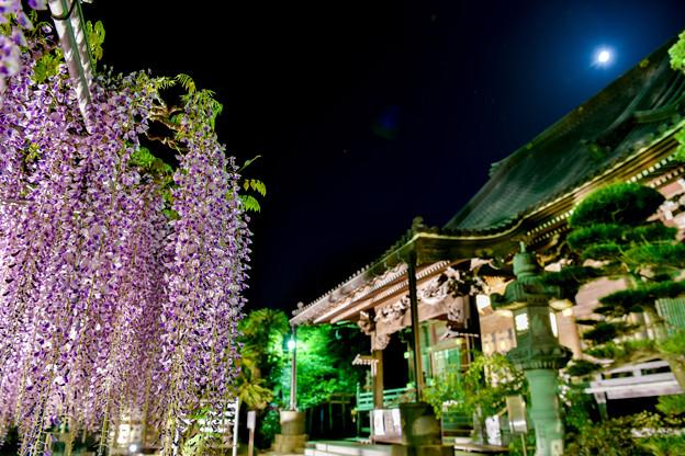 月夜のお寺と藤