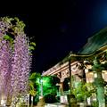 写真: 月夜のお寺と藤