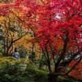 写真: 京の秋 3