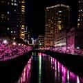 写真: 桜イルミネーション