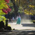 写真: 秋風掃落葉