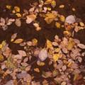 写真: 小川の落ち葉