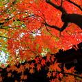 写真: 薬師寺の紅葉