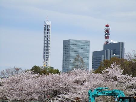 新都心と桜と工事中