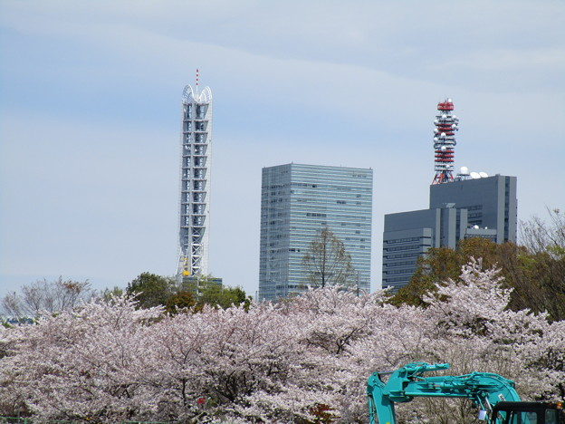 写真: 新都心と桜と工事中
