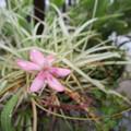 写真: 不明の花