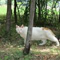 ネコさんに出会った(=^・^=)