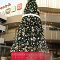 Photos: 噴水と共にクリスマスツリー