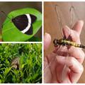 庭で見つけた昆虫