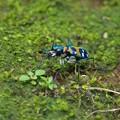 餌は蟻なのね・・・。