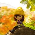 写真: 黄色の世界