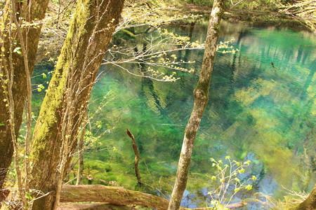 白神山地 沸壺の池