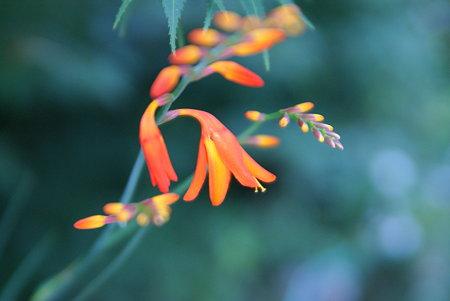 水彩画のような花
