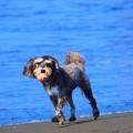 Photos: お散歩ワンコ@湘南・鵠沼海岸 #湘南 #藤沢 #海 #波 #wave #surfing #mysky #犬 #dog #animal