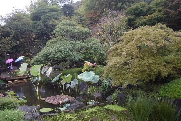 雨の長谷寺 #湘南 #鎌倉 #kamakura #寺