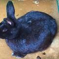 写真: 明月院の兎 #湘南 #鎌倉 #kamakura #寺 #temple #兎 #rabbit #animal