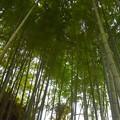 写真: 明月院の竹林 #湘南 #鎌倉 #kamakura #寺 #temple #竹林