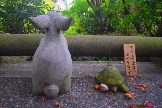 兎と亀@明月院 #湘南 #鎌倉 #kamakura #寺 #temple