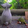 写真: 兎と亀@明月院 #湘南 #鎌倉 #kamakura #寺 #temple