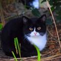 写真: 湘南・鵠沼海岸のニャンコ #湘南 #藤沢 #海 #波 #wave #surfing #猫 #cat #animal