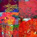写真: 妙義山の紅葉 #紅葉 #autumreaves #秋 #群馬
