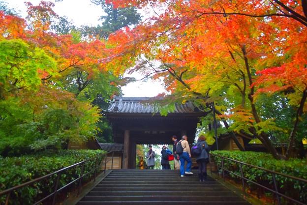 瑞鹿山 円覚興聖禅寺総門 #鎌倉 #kamakura #北鎌倉 #寺 #temple #紅葉 #autumnleaves