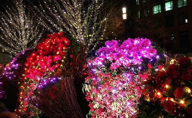 フラワーイルミネーション #東京ミチテラス #イルミネーション #クリスマス #丸の内 #東京駅 #tokyo