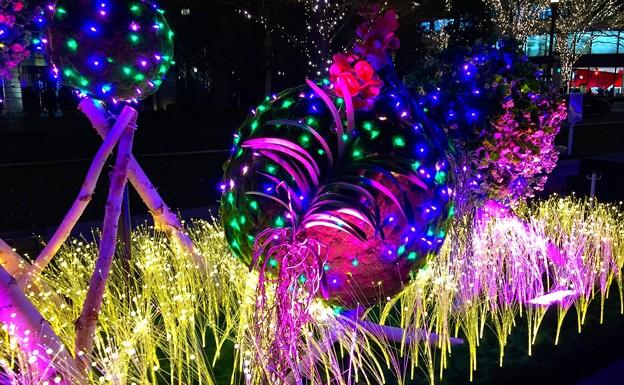鮮やかなニコライバーグマン演出のイルミネーション #東京ミチテラス #イルミネーション #クリスマス #丸の内 #東京駅 #tokyo