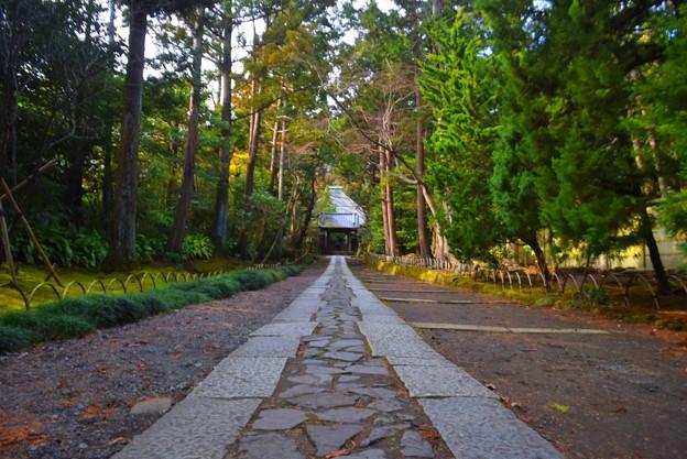 寿福寺参道 #鎌倉 #kamakura #湘南 #temple #寺 #mysky