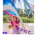 Photos: こいのぼり