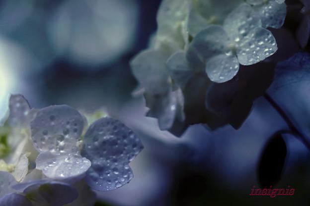 雨上がりの幻想.......