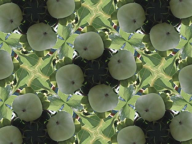 柿柿柿・・・柿