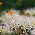 写真: 花雲海