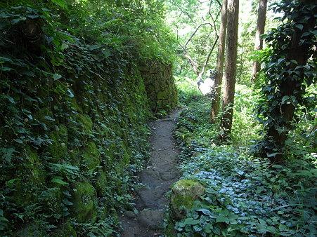 岩地遊歩道。左側の石垣は苔が覆われている