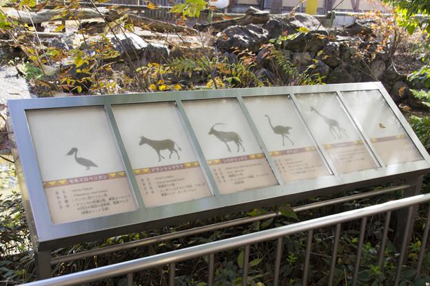 サバンナ(園の)ガイド [羽村市動物公園]