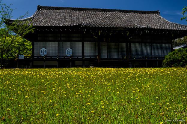「花咲く」 勧修寺 - 京都
