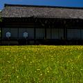 Photos: 「花咲く」 勧修寺 - 京都