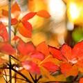 写真: 晩秋の庭で