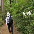 ヤマユリ咲く道4740c