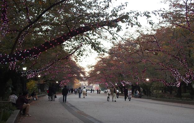 上野公園夕方639cb